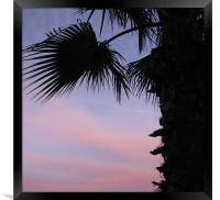 Sunset and palm tree, Framed Print