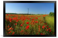 Poppies and Telegraph poles , Framed Print