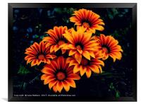 Orange Petals, Framed Print