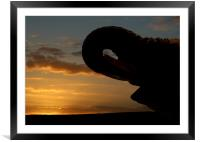 Elephant and suset in SA, Framed Mounted Print