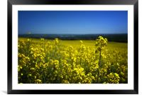 Fields of gold, Framed Mounted Print