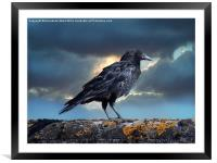 Rook on the Roof., Framed Mounted Print