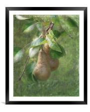 A Pair of Pears, Framed Mounted Print