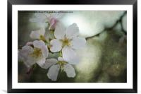 Kiss of Blossom, Framed Mounted Print