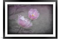 Flowers And Pink., Framed Mounted Print