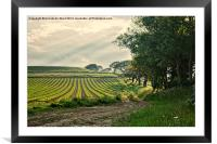 Crop and Countryside, Framed Mounted Print