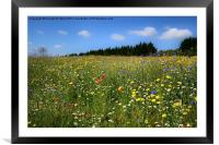 Wild Flowers Meadow, Framed Mounted Print