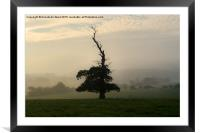 One Misty Autumn Tree., Framed Mounted Print