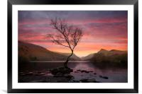 Lone tree at Sunrise, Framed Mounted Print