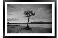 The lone Tree in B&W, Framed Mounted Print
