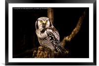 The Great Horned Owl, Framed Mounted Print