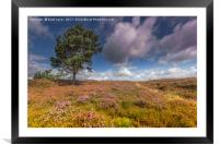 North Yorkshire Moors, Framed Mounted Print