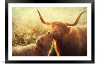 Mammy Love. Highlands Trossachs. Scotland, Framed Mounted Print