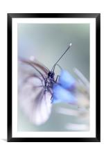 In the Light , Framed Mounted Print