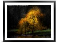 Weeping Gold, Framed Mounted Print