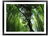 Jizo-in, Kyoto, Bamboo Temple, Framed Mounted Print