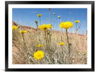 Yellow flowers, Framed Mounted Print