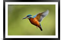 On the wing, Framed Mounted Print