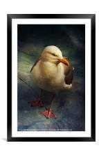 Portrait of a Seagull (Laridae), Framed Mounted Print