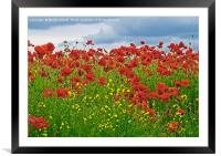 Painterly Poppies, Framed Mounted Print