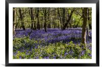 Binfield Heath Woods in South Oxfordshire, Framed Mounted Print