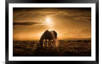 Gower pony at sunset on Cefn Bryn, Framed Mounted Print