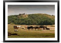 Cows grazing under Pennard Castle, Framed Mounted Print