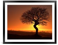 Twisted oak sunset silhouette, Framed Mounted Print
