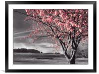 Pink Blossoms, Framed Mounted Print