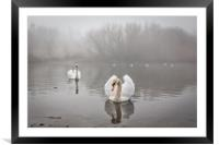 Swans in the Mist, Framed Mounted Print