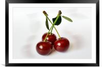 three sour cherries, Framed Mounted Print