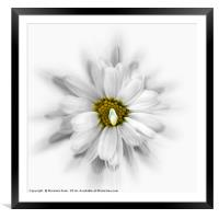bloom in shades of white, Framed Mounted Print