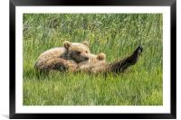 My Foot's So Pretty, Oh So Pretty - Bear Cubs, No., Framed Mounted Print