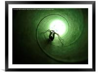 Spiderphobia, Framed Mounted Print