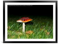 Fly Agaric Magic, Framed Mounted Print