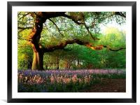 Oak Tree Canopy with Bluebells, Framed Mounted Print