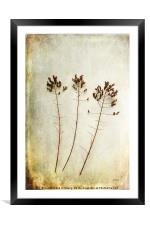 Dancing Trio, Framed Mounted Print