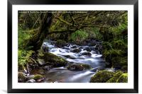 Hidden Stream, Framed Mounted Print