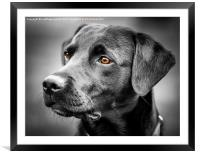 For The Love Of Labradors, Framed Mounted Print