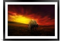 young couple of horses grazing in the hills at dus, Framed Mounted Print