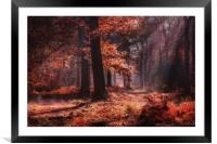 Fresh Autumn Woodlands, Framed Mounted Print