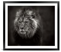 The Old Lion, Framed Mounted Print