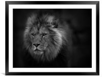 The Lion, Framed Mounted Print