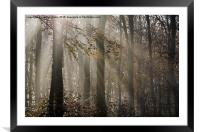 Sunlight Breaks Through the Fog in the Woods, Framed Mounted Print