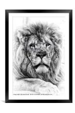King of the Jungle, Framed Mounted Print