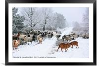 Moorland Sheep on a Frosty Winter Day, Framed Mounted Print