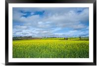 Some yellow...some blue, Framed Mounted Print