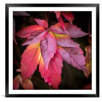 Red Leaves., Framed Mounted Print