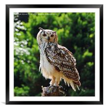 Looking at You!!          , Framed Mounted Print
