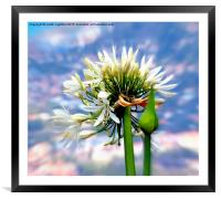The Island of Flowers Madeira x3, Framed Mounted Print